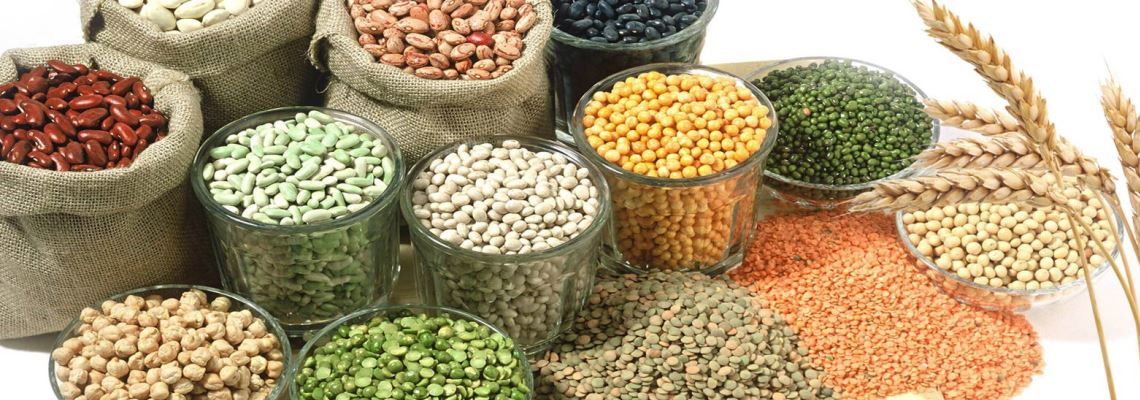 Pulses Exporter India